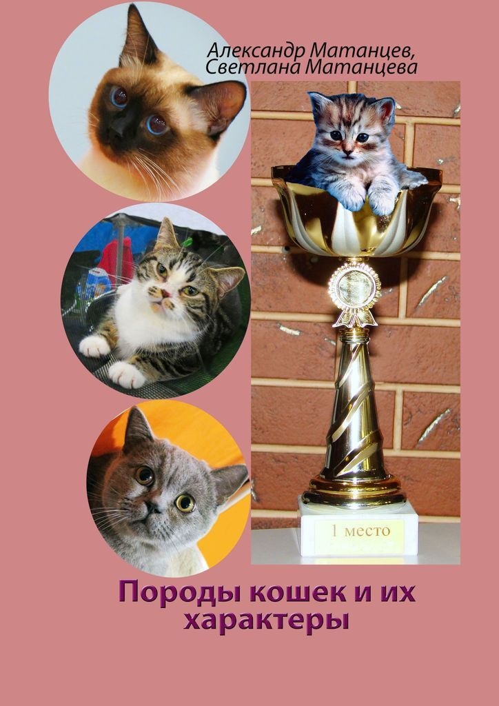 Породы кошек и их характеры