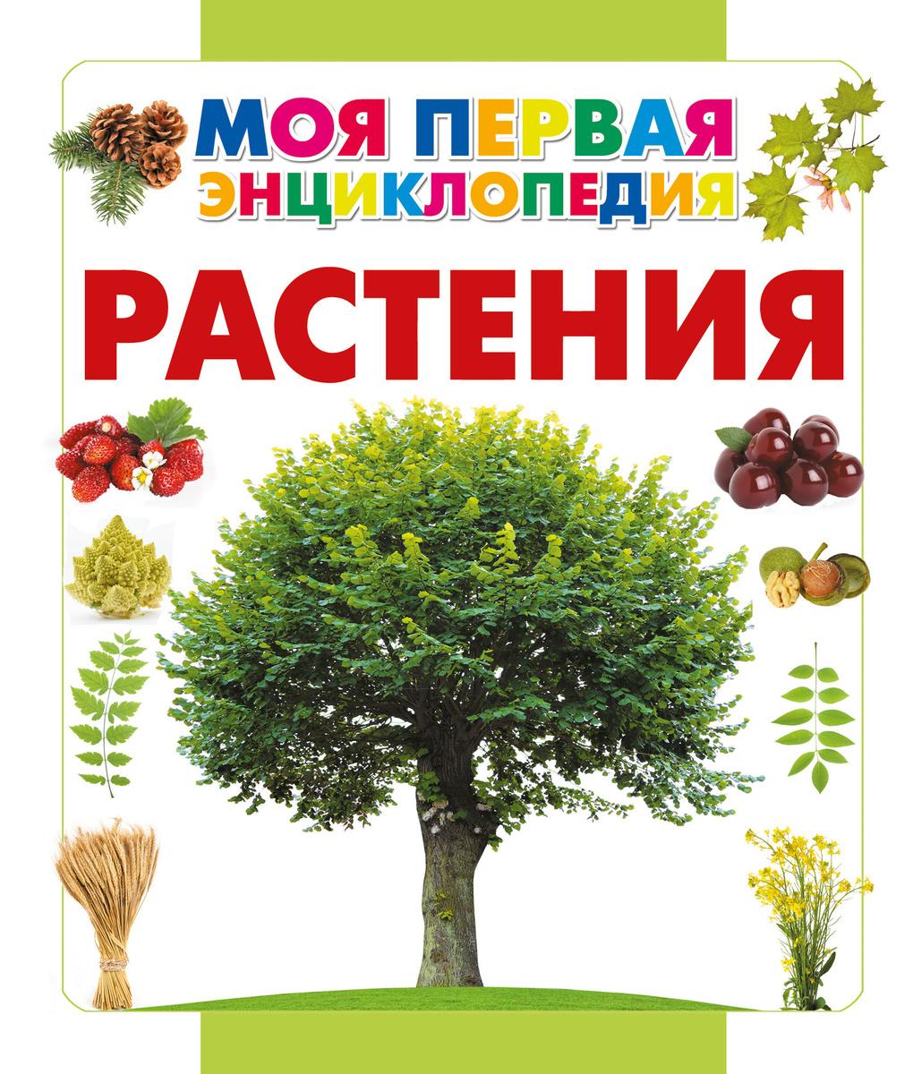 Растения | Нет автора #1