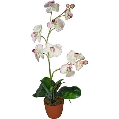Растение искусственное Фаленопсис кремовый 80 см-19980