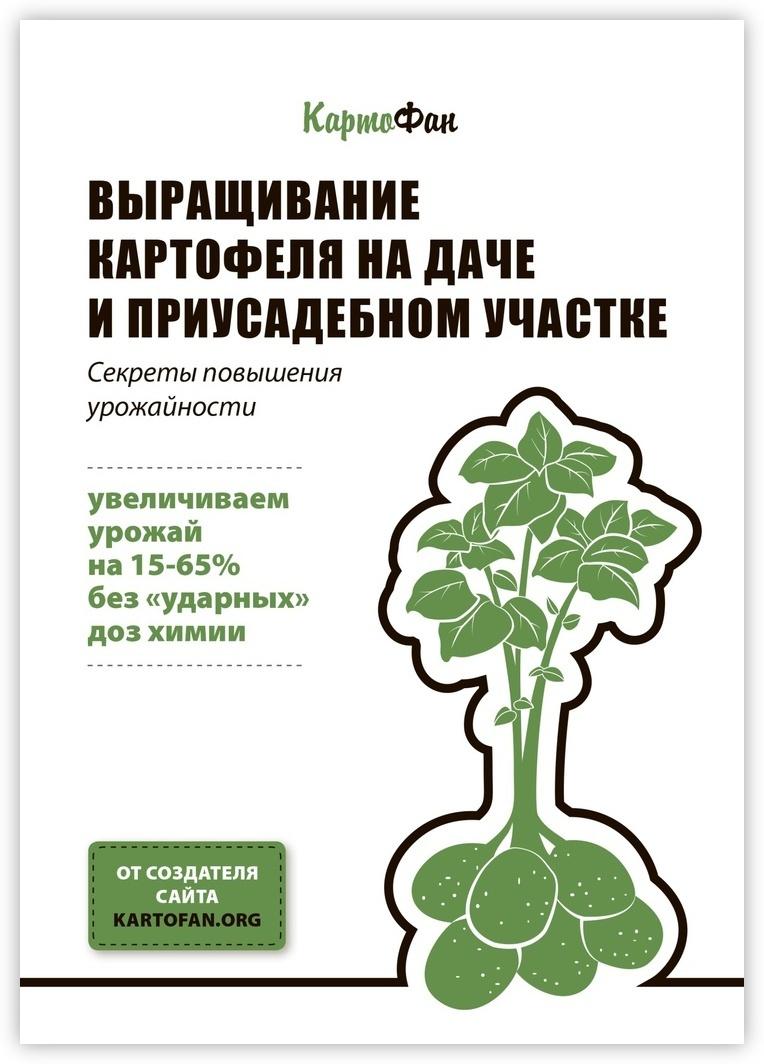 Выращивание картофеля на даче и приусадебном участке #1