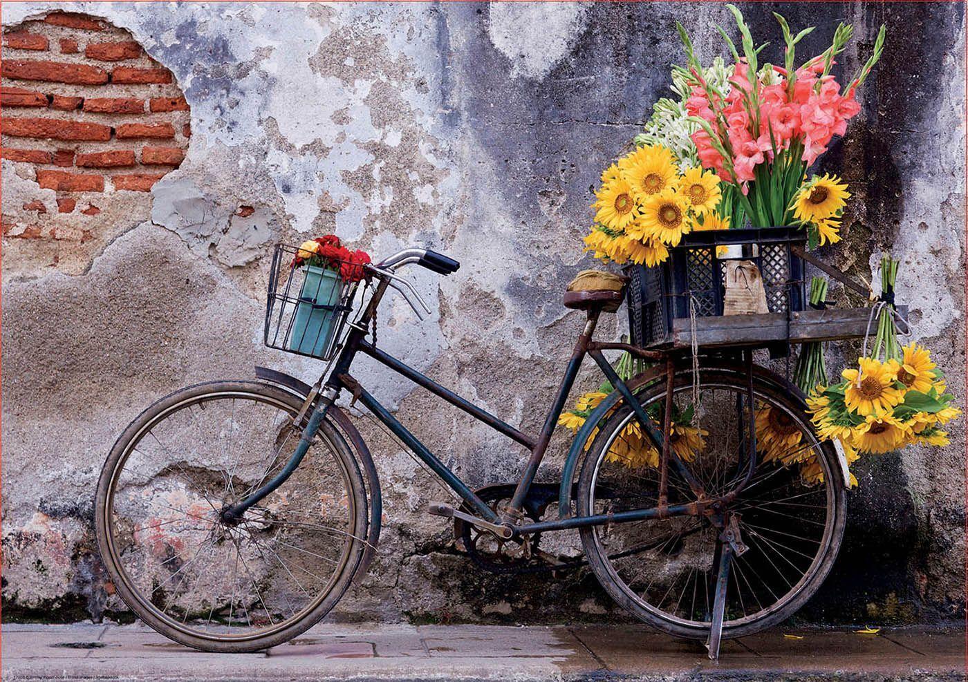 обои на рабочий стол велосипед и цветы платья белые