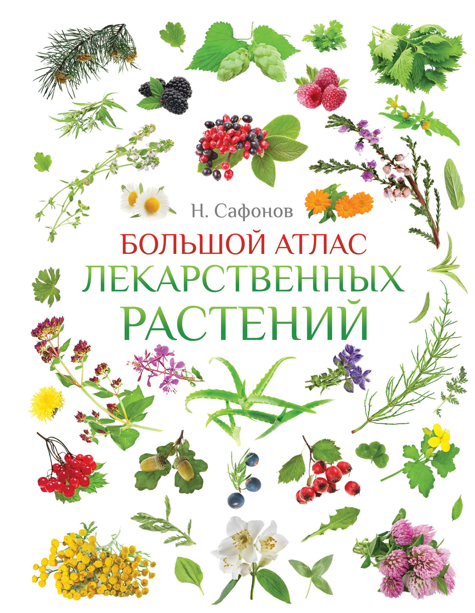 Атлас растений в картинках с названиями двери