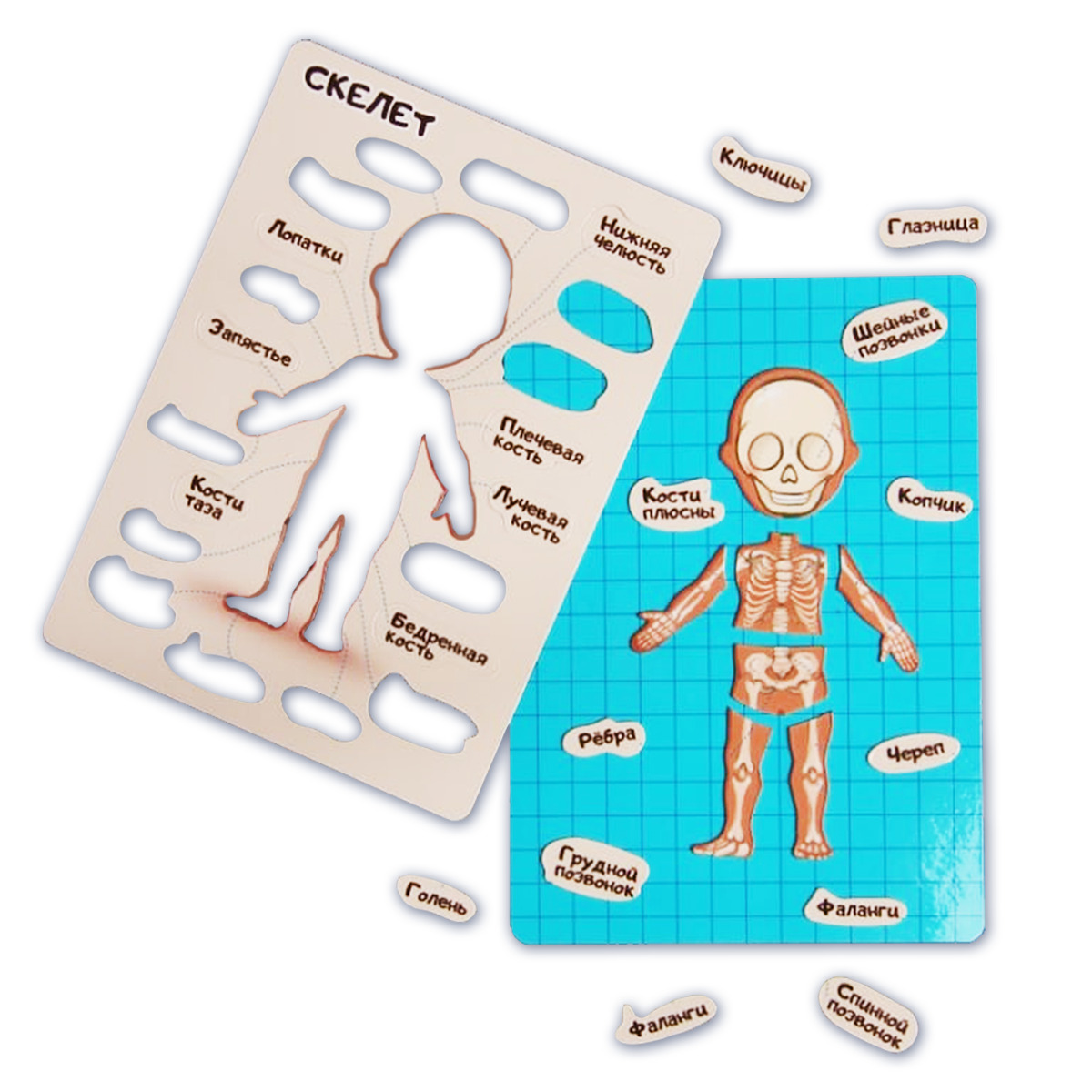 """Магнитная детская настольная развивающая игра-пазл """"Как устроен человек - анатомия, скелет"""" - Notta & Belle"""