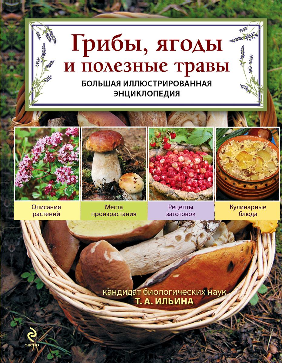 Грибы, ягоды и полезные травы | Ильина Татьяна Александровна  #1