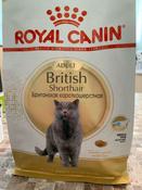 """Корм сухой Royal Canin """"British Shorthair Adult"""", для  британских короткошерстных кошек старше 12 месяцев, 400 г #9, Евгения Степанова"""