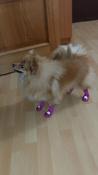 Носки для собак БАРБОСки с высоким латексным покрытием, фиолетовый, размер 1 #1, Людмила Б.