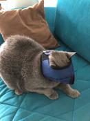 Намордник ( нейлоновый) для кошек L #2, Екатерина П.