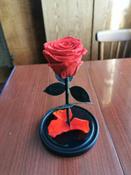 Долговечная стабилизированная роза в стеклянной колбе Premium X  - Notta & Belle #2, Денис Ш.