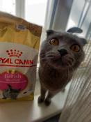 "Корм сухой Royal Canin ""British Shorthair Kitten"", для британских короткошерстных котят в возрасте от 4 до 12 месяцев, 2 кг #7, Алёна Б."