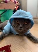 Толстовка с капюшоном для собак и кошек, Цвет: Голубой, Размер: M #14, Юлия К.