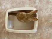 Туалет для кошек PetTails глубокий, большой (под наполнитель) 50*38*13см, бежевый #4, Ольга С.
