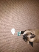 Игрушка для животных Hexbug Мышка на радиоуправлении белая #8, Рустем Я.