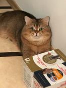 """Консервы Royal Canin """"British Shorthair Adult"""", для кошек британской породы старше 12 месяцев, мелкие кусочки в соусе, 85 г, 12 шт #1, Ivanov Vladislav"""