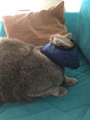 Намордник ( нейлоновый) для кошек L #3, Екатерина П.