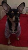 Толстовка с капюшоном для собак и кошек, Цвет: Светло-Сиреневый, Размер: L #6, Алёна Н.