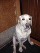 Суспензия Празител плюс от глистов для собак средних и крупных пород #3, Надбережная Алайа