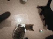 Интерактивная игрушка для кошек PetLeon Вращающийся на 360 градусов мяч USB заряжаемый светодиодная подсветка #1, Наталья