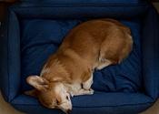 Лежанка для животных Bedfor, со съемными чехлами, цвет: синий, 90 x 60 x 18 см #8, Екатерина Д.