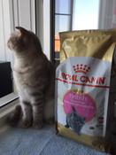 """Корм сухой Royal Canin """"British Shorthair Kitten"""", для британских короткошерстных котят в возрасте от 4 до 12 месяцев, 2 кг #1, Юлия К."""
