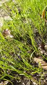 Профессиональный жидкий газон HydroSeed 7-в-1 #9, Наумова Марина