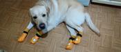 Прорезиненные теплые носки для собак Грызлик Ам, Цвет Оранжевый, Размер 3XL (A-66мм, B-80мм, C-50мм, D-150мм) #8, Юлия В.