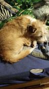 Суспензия Пазител  от глистов для щенков и собак мелких пород #1, Лариса В.