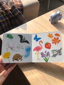 Книжки-картонки. Цвета в природе #7, Елизавета П.
