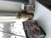 """Консервы Royal Canin """"British Shorthair Adult"""", для кошек британской породы старше 12 месяцев, мелкие кусочки в соусе, 85 г, 12 шт #4, ольга к."""