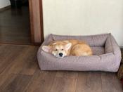 Лежанка для животных Bedfor со съемными чехлами, цвет Мокко, размер 70 х 50 см #14, Екатерина Л.