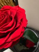 Букет из стабилизированных цветов Notta & Belle Роза, 26 см, 753 гр #1, Мария К.