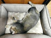 Лежанка Bedfor со съемными чехлами, цвет Бежевый,  размер 70*50 см #9, Гизатуллина Светлана