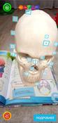Анатомия. 4D Энциклопедия в дополненной реальности #2, Хабибрахманова Алия