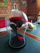 Долговечная стабилизированная роза в стеклянной колбе Premium X  - Notta & Belle #9, Лариса Ц.