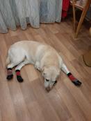 Прорезиненные теплые носки для собак Грызлик Ам, Цвет Разноцветные, Размер 3XL (A-66мм, B-80мм, C-50мм, D-150мм) #5, Наталья Е.