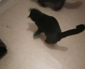 Интерактивная игрушка для кошек PetLeon Вращающийся на 360 градусов мяч USB заряжаемый светодиодная подсветка #5, Наталья