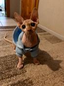 Толстовка с капюшоном для собак и кошек, Цвет: Голубой, Размер: M #15, Полина Ж.