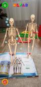Анатомия. 4D Энциклопедия в дополненной реальности #1, Хабибрахманова Алия