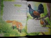 Чудесное путешествие Нильса с дикими гусями #51, Юлия Б.