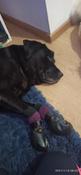 Прорезиненные теплые носки для собак Грызлик Ам, Цвет Фиолетовый, Размер 3XL (A-66мм, B-80мм, C-50мм, D-150мм) #12, Анна К.