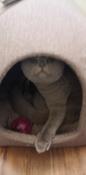 """Домик для животных Бобровый Дворик, """"Сладкий Сон"""" Рогожка, №1, Коричневый 39х39х35см #1, Юлия Ф."""
