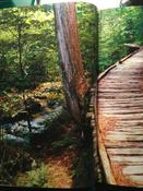 Сила леса. Как деревья помогают нам обрести здоровье и радость (комплект)   Нет автора #3, Ирина Ч.