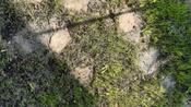 Профессиональный жидкий газон HydroSeed 7-в-1 #7, Наумова Марина