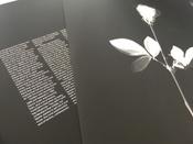 Depeche Mode. Violator (LP) #15, Яна К.
