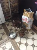 """Корм сухой Royal Canin """"British Shorthair Adult"""", для британских короткошерстных кошек старше 12 месяцев, 2 кг #4, Полина Сорокина"""
