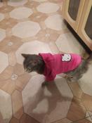 Толстовка с капюшоном для собак и кошек, Цвет: Розовый, Размер: M #5, Маргарита Б.