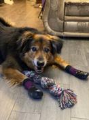 Прорезиненные теплые носки для собак Грызлик Ам, Цвет Фиолетовый, Размер 3XL (A-66мм, B-80мм, C-50мм, D-150мм) #1, Виктория Л.