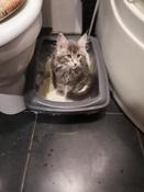 Туалет для кошек PetTails глубокий, большой (под наполнитель) 50*38*13см, серый #2, Елена П.