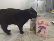 "Корм сухой Royal Canin ""British Shorthair Adult"", для  британских короткошерстных кошек старше 12 месяцев, 400 г #12, Евгений Е."