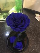 Стабилизированные цветы в стекле Notta & Belle Роза, 26 см, 753 гр #12, Татьяна С.
