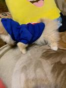 Толстовка с капюшоном для собак и кошек, Цвет: Синий, Размер: XS #1, кира в.